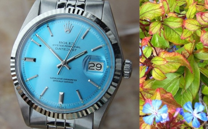 rolex-light-blue-dial-vintage-plus-flowers