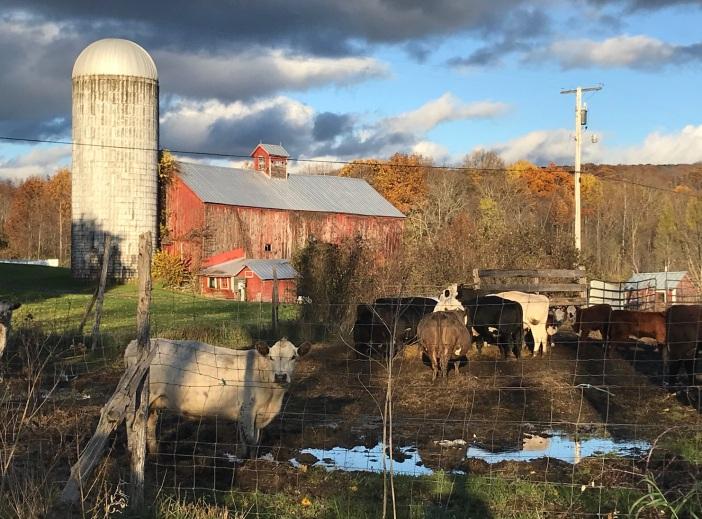Farm after a storm.vinchesi