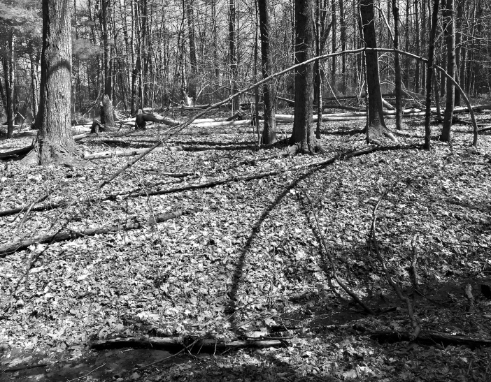 Ellipse in the Woods.1