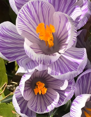 Spring flowers3